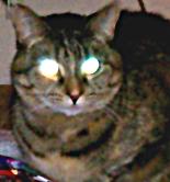 Warkitty avatar