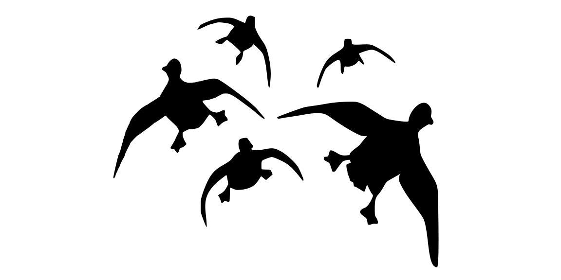 Grouped ducks