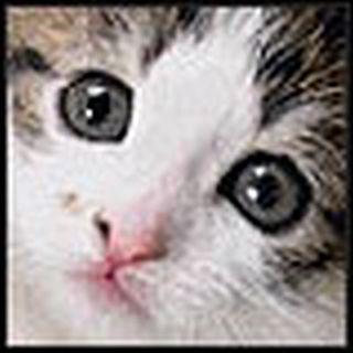 Cat 03