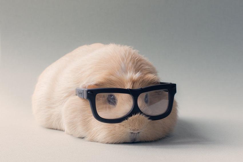 42 booboo wearing glasses