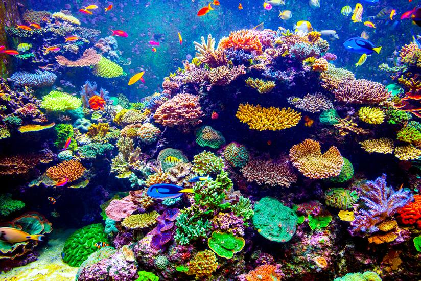 Colorful coral reef.jpg.824x0 q71 crop scale