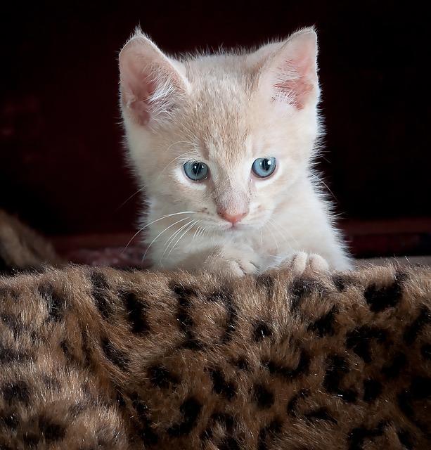 Kitty 551556 640
