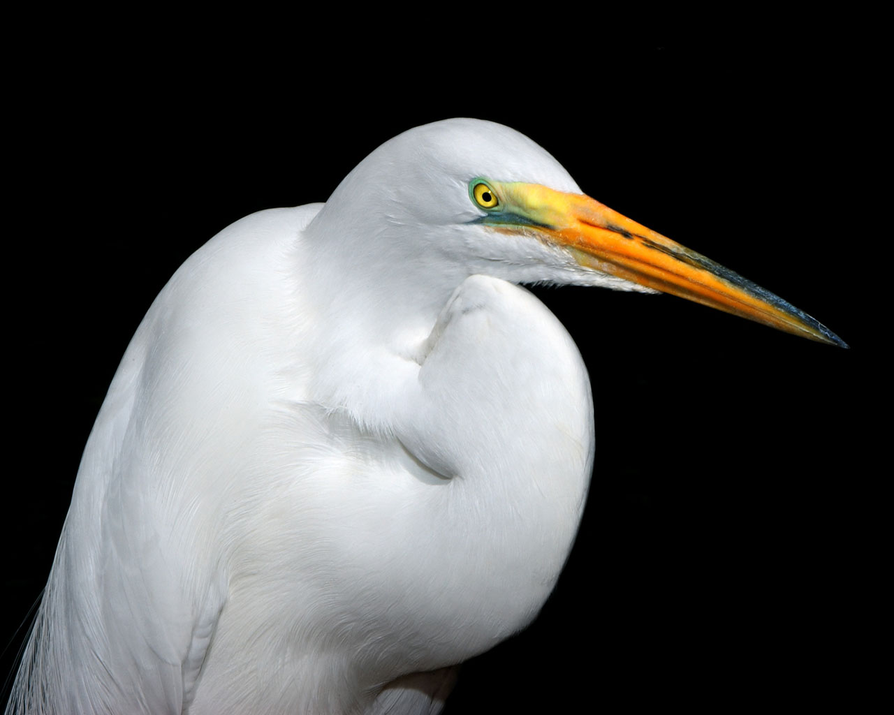00712 whiteheron