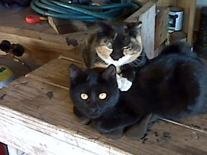 Toby pj kittens