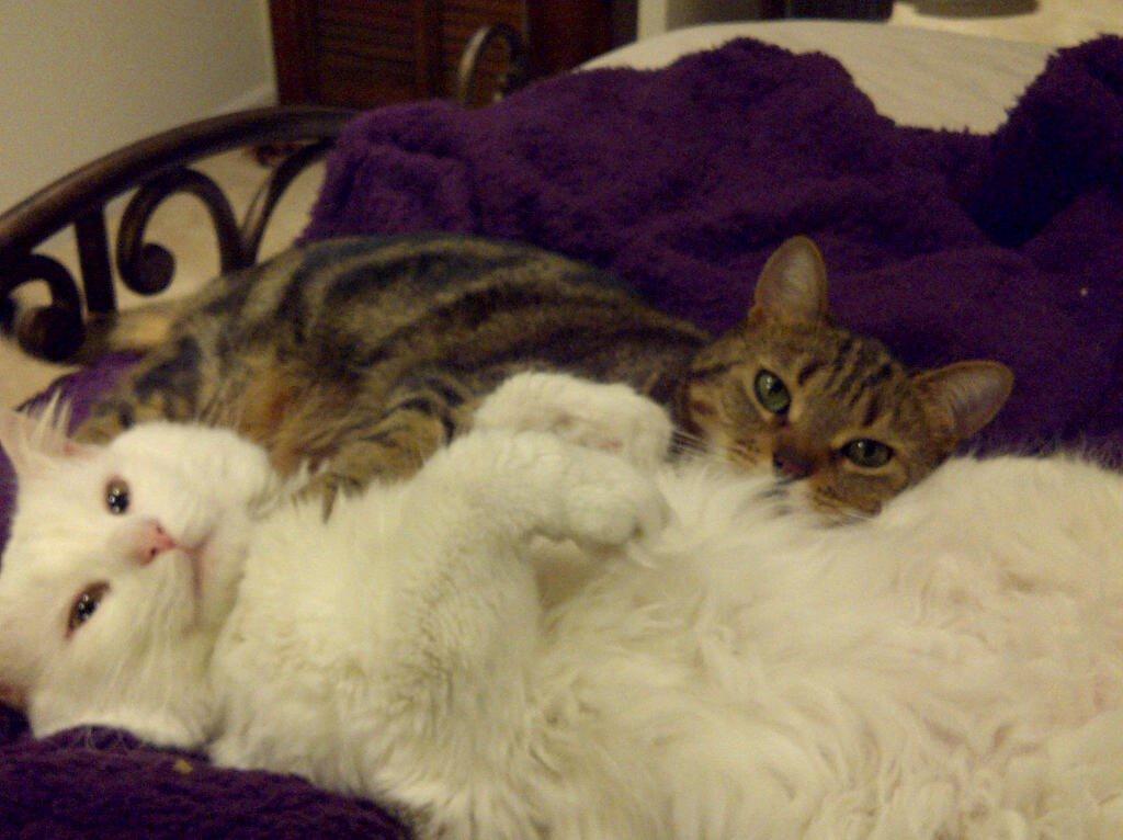 Buddy and baby  nov. 2010