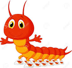 Red centipede 1