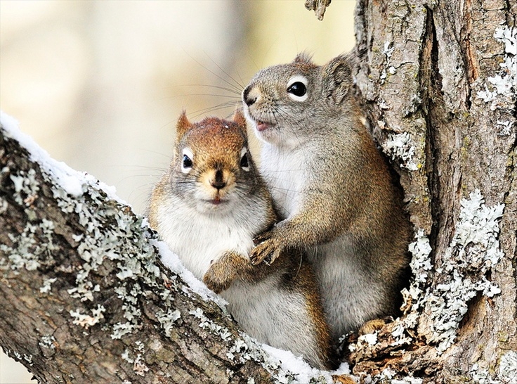 0cff03f7380683d255e360f5cb422101  cute squirrel squirrels