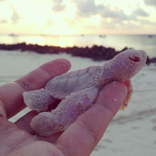 Albino turtle 2