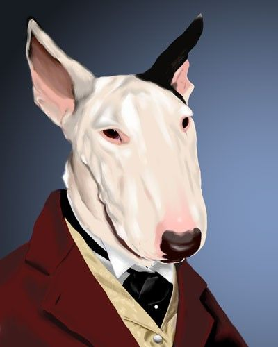 Mr bullterrier