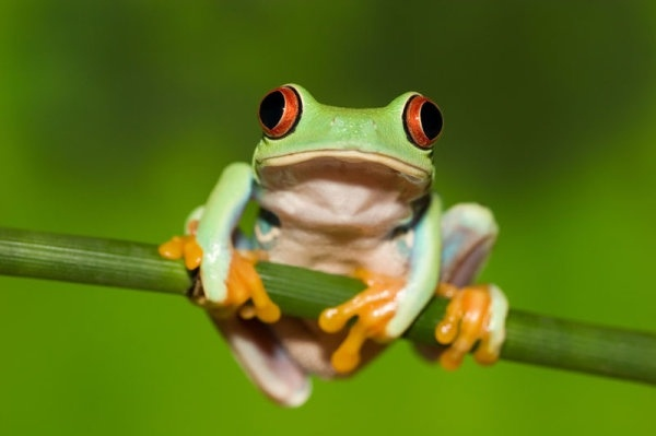 Cute frog 01 hd pictures 168926