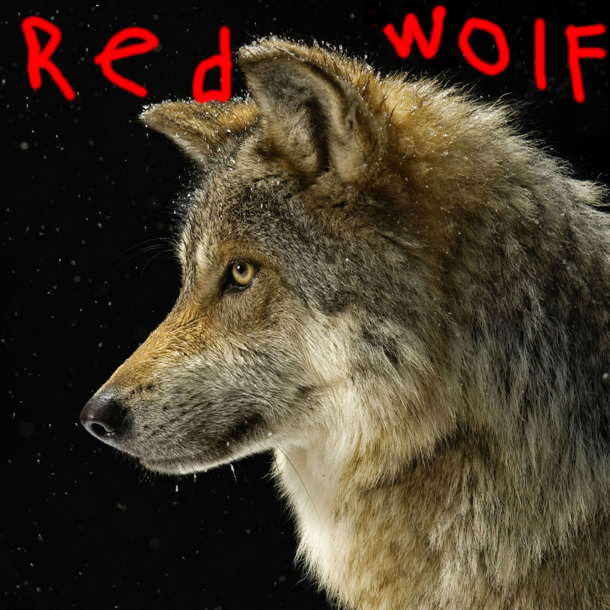 Gray wolf thumb
