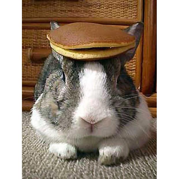 Rabbit pancakes 1571206i