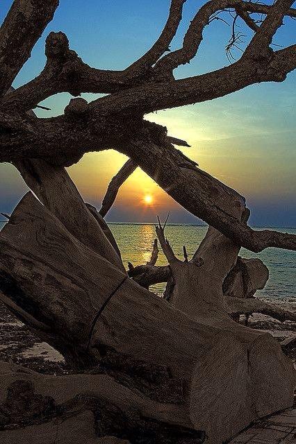 Oceandriftwood
