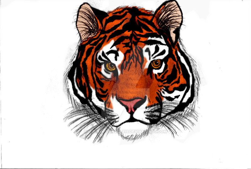 Siberian tiger sketch colored by corruptangel315 dvow59
