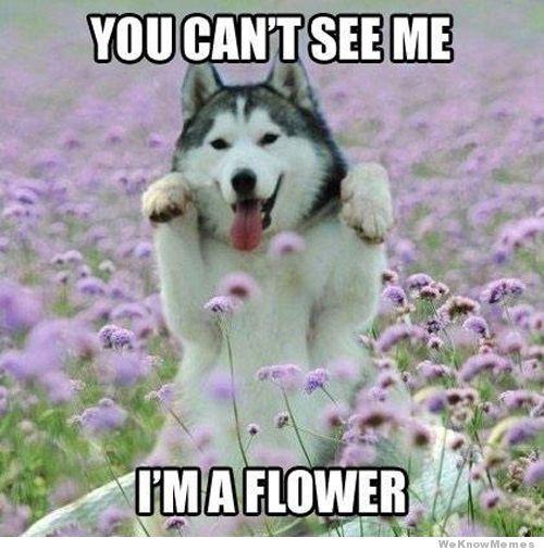 Dog meme 25