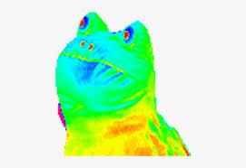 Still rainbow frog