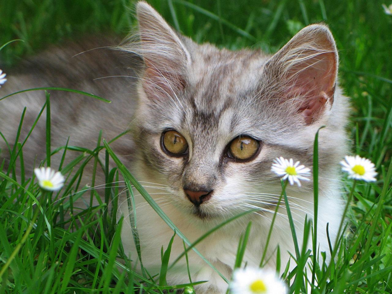 Best elegant cat