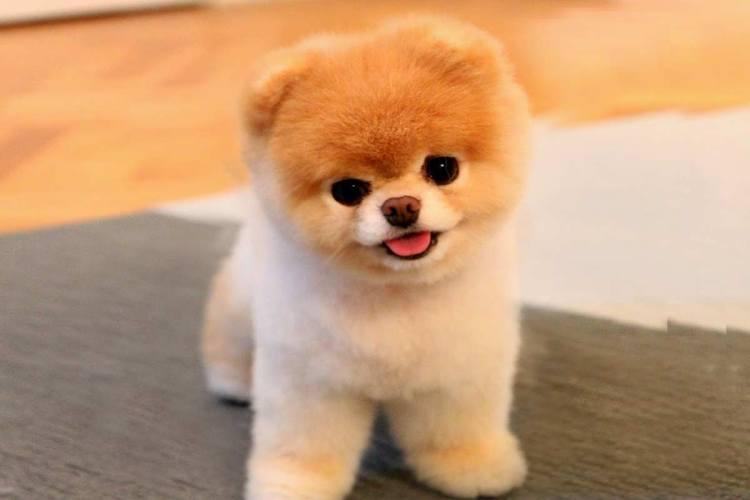 Boo dog 1
