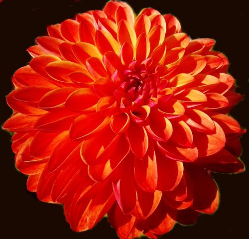 Flowergirlavatar