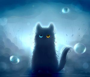Cat heterochromia black cat 128354 300x255