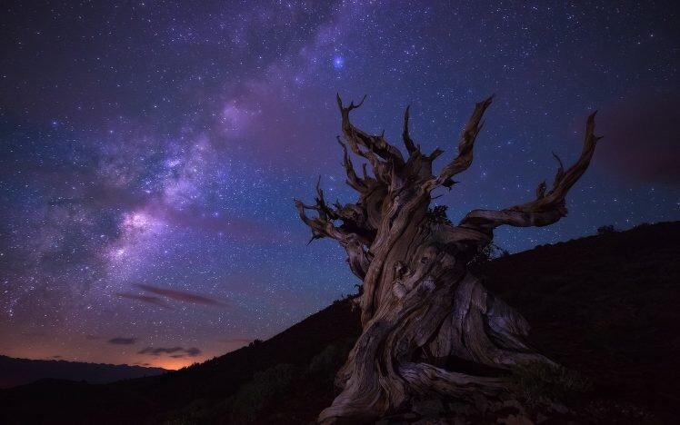 Tree at night under milky way