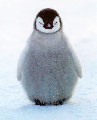 Cute penguin1
