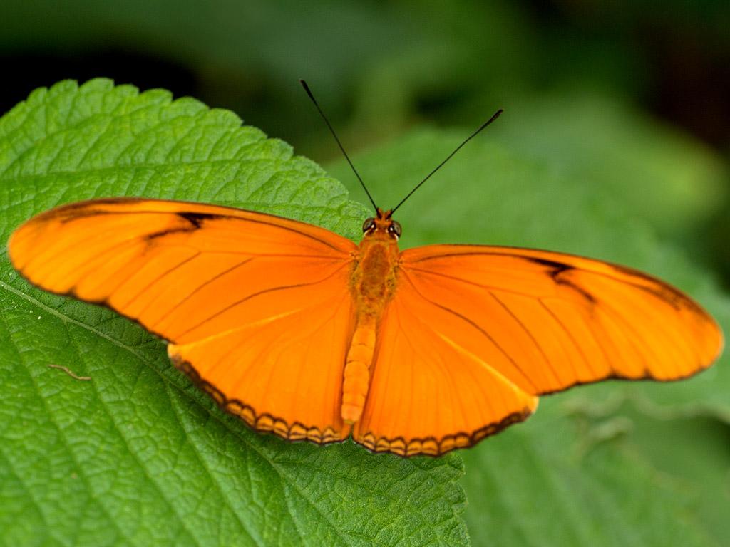 Butterfly 10 l