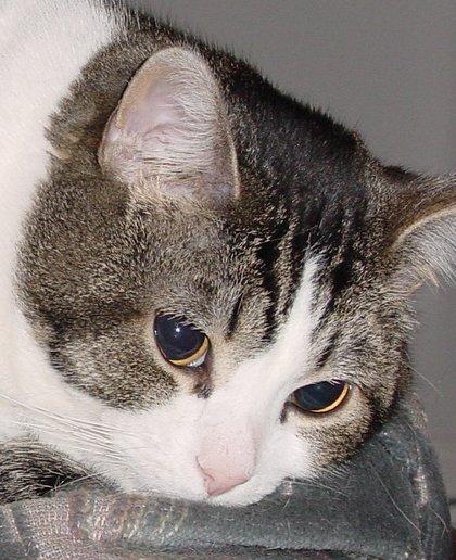 Louie avatar