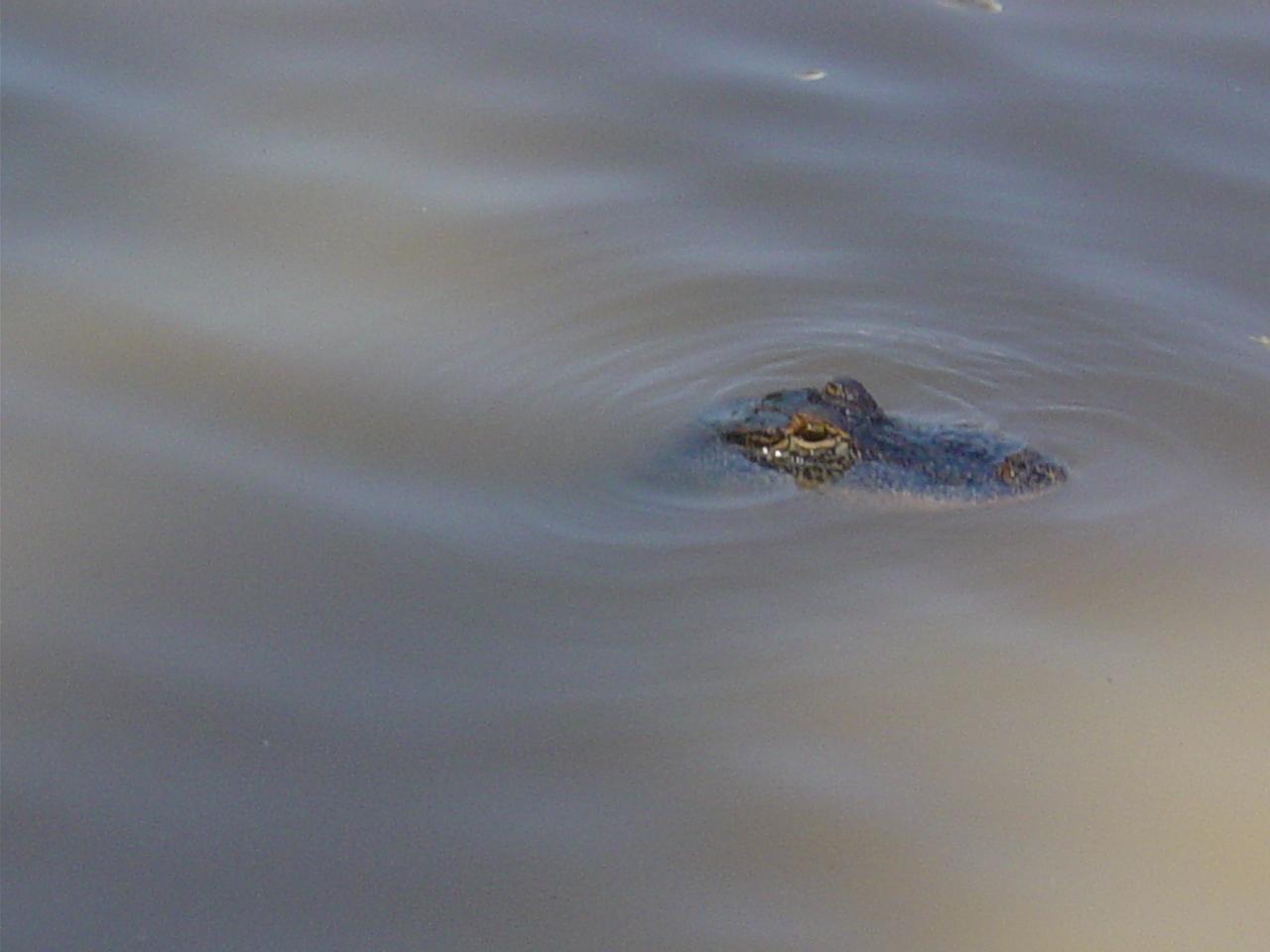 Gator flip